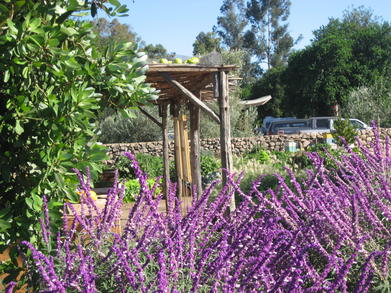 Viñedos-Organicos-Emiliana-Gardens-401